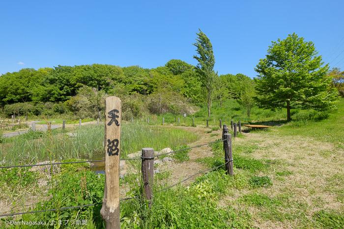 西側地区の天沼