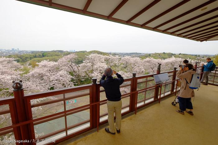 展望台からで桜を撮る人々