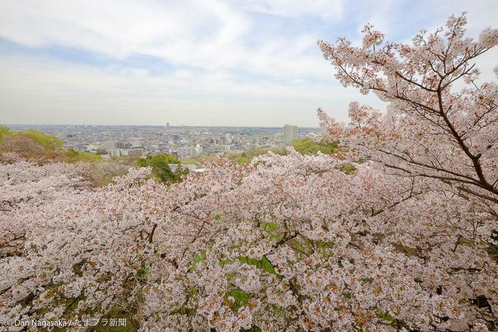 枡形山展望台からの向ヶ丘遊園駅の方面への眺望