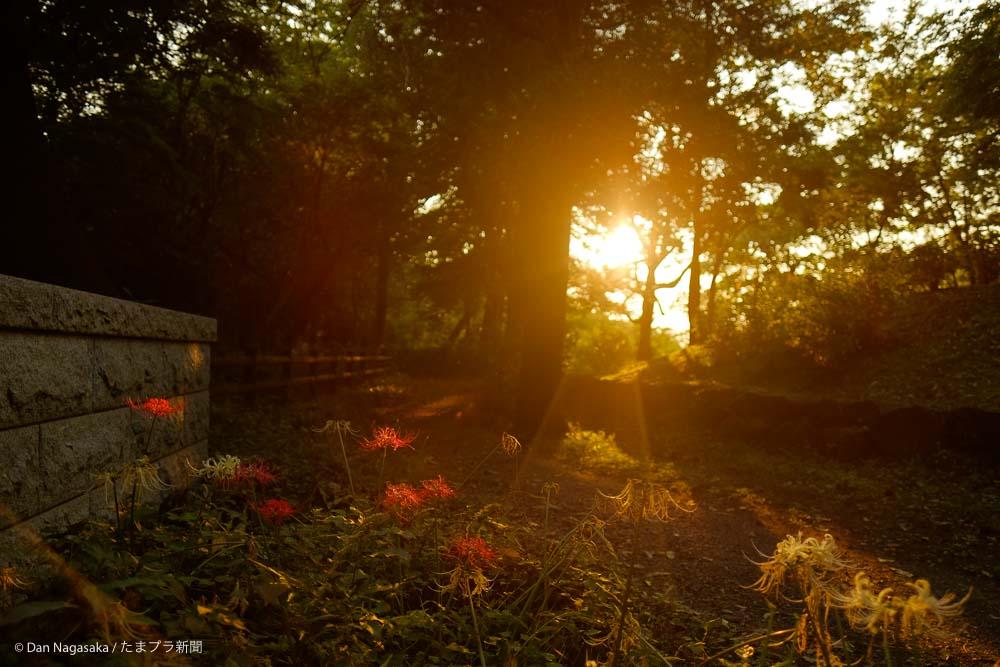 彼岸花と太陽