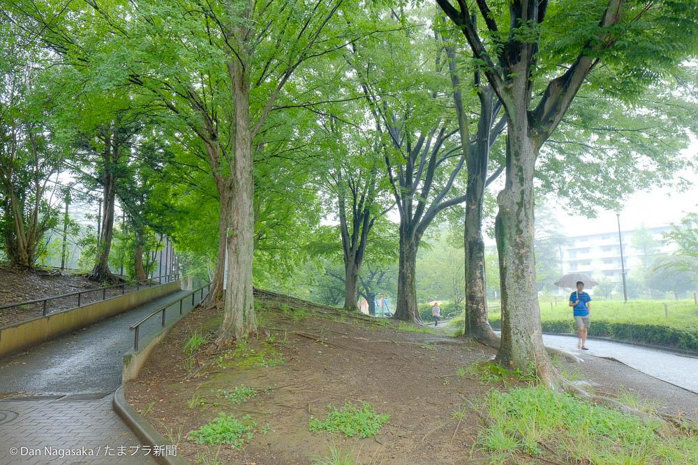 雨に濡れていた雑木林
