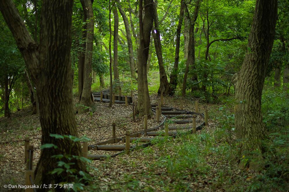 雑木林の散歩道