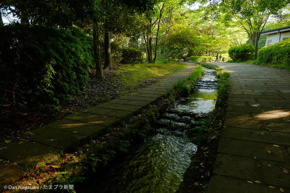 歩道沿いの小川