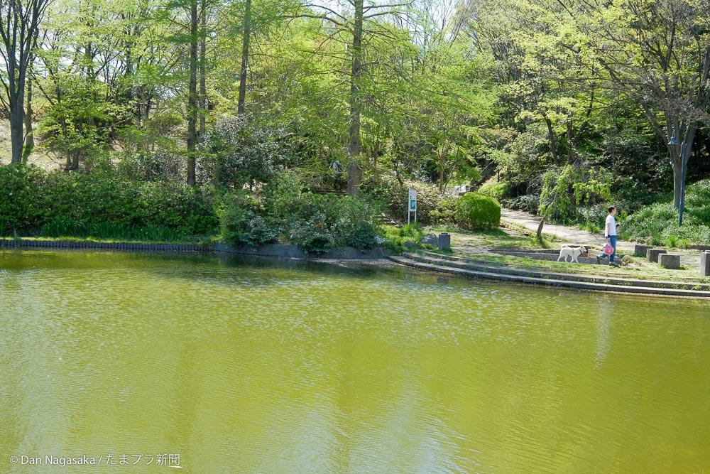 山崎の池と犬の散歩