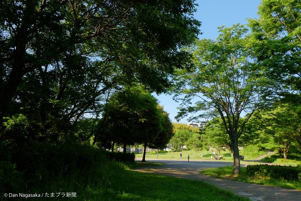 山田富士公園の樹木