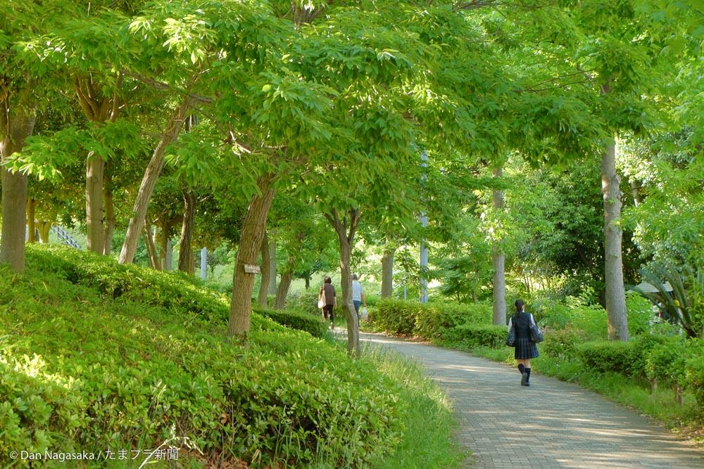 山田富士公園横の歩道