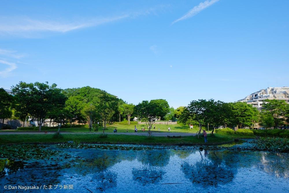 山田富士公園の池