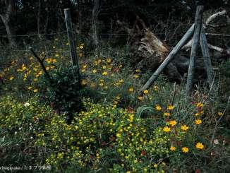 菅生緑地の花畑と倒木