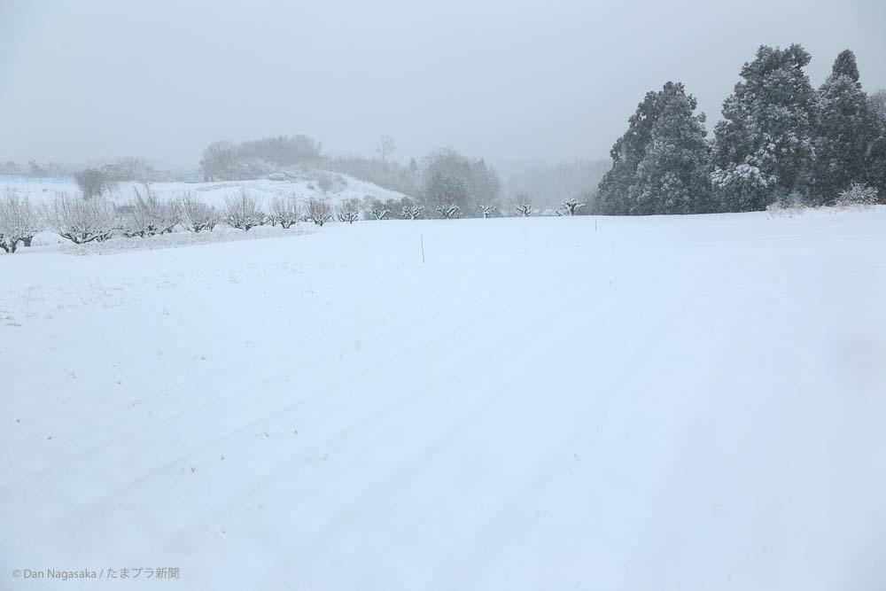 大雪の花桃の丘