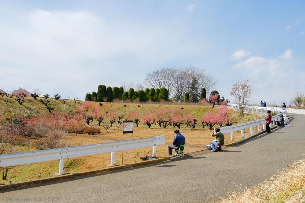 花桃の丘で絵を描く人
