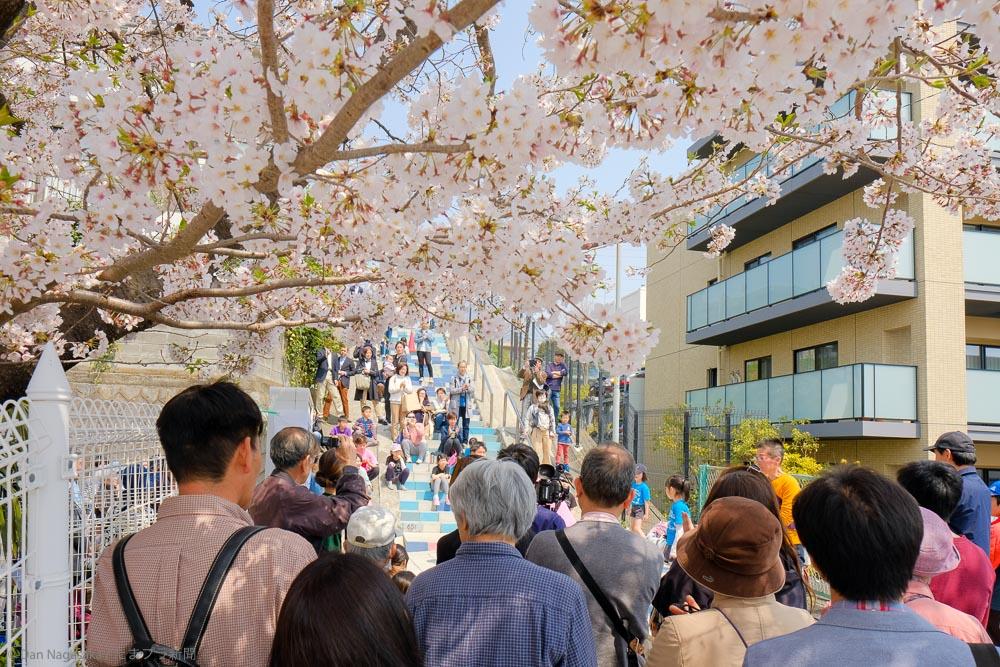 満開の桜と100段階段