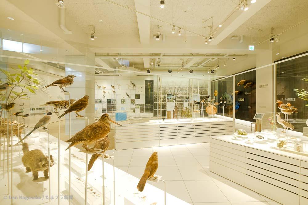 かわさき宙と緑の科学館の鳥の剥製