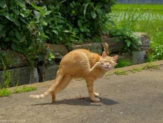 早渕川の野良猫