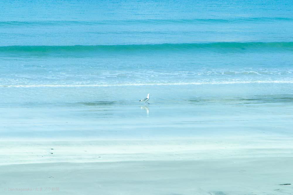 海辺のカモメ