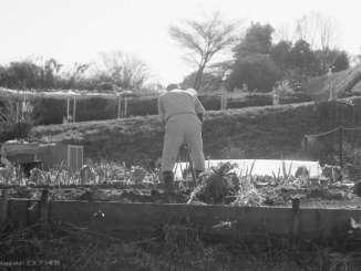 畑仕事する人