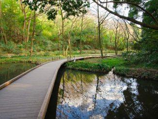 湿生植物園