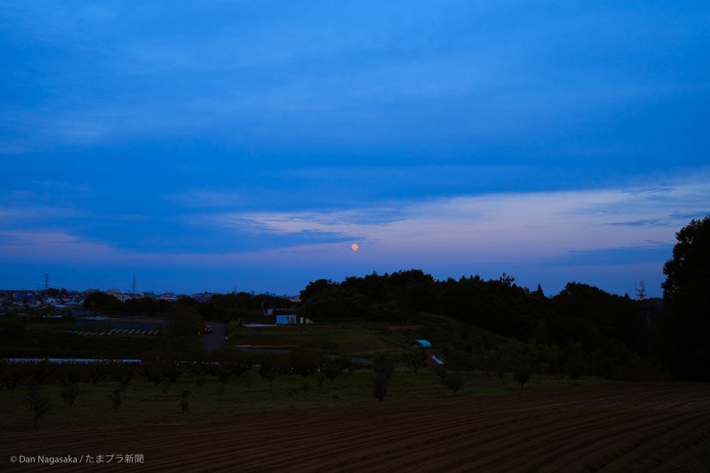 花桃の丘からの満月
