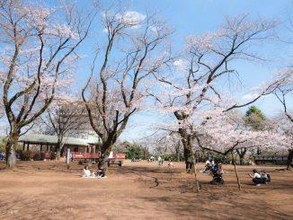 枡形山の桜、2021年3月23日