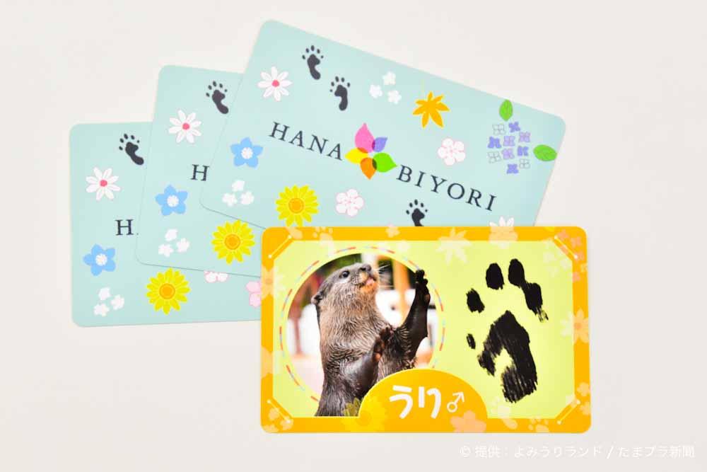 コツメカワウソ手形カード