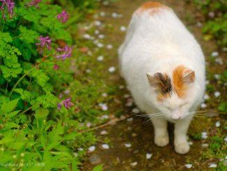 猫の日の白い地域ねこ