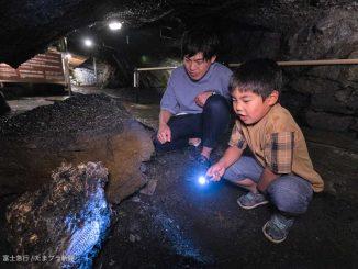 富岳風穴の化石発見イベント