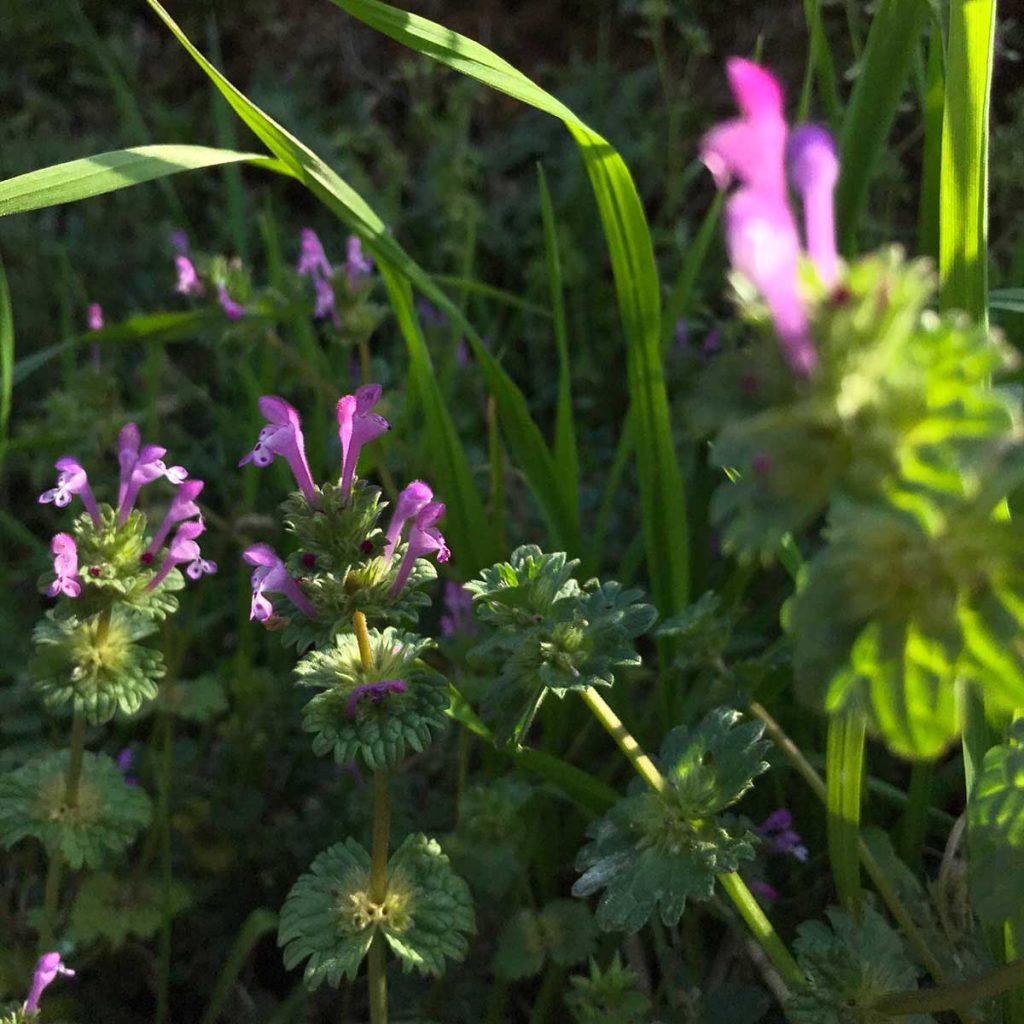 小さな花のiPhone写真