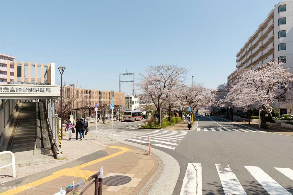 宮崎台駅南口タクシーバス乗り場と桜並木