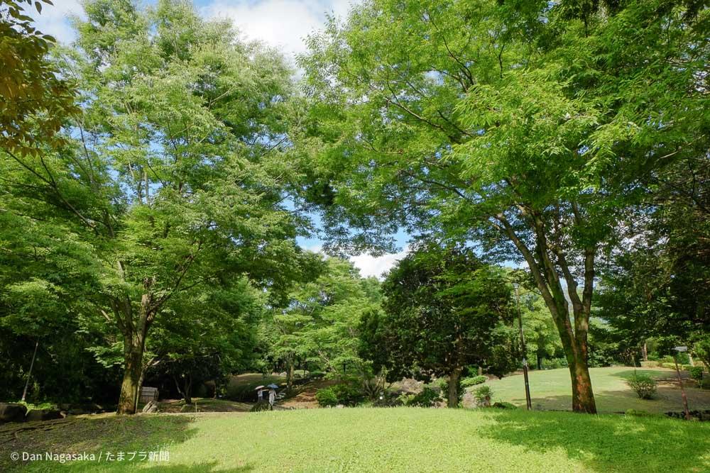 夏の王禅寺ふるさと公園